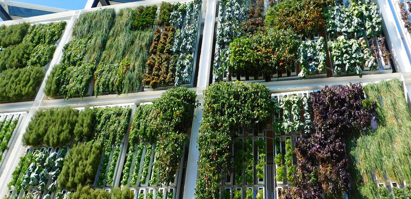 Outdoor vertical gardens: unique green spaces!