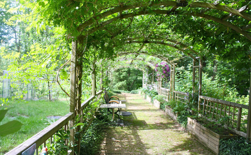 Plants for pergolas – which ones should you choose?